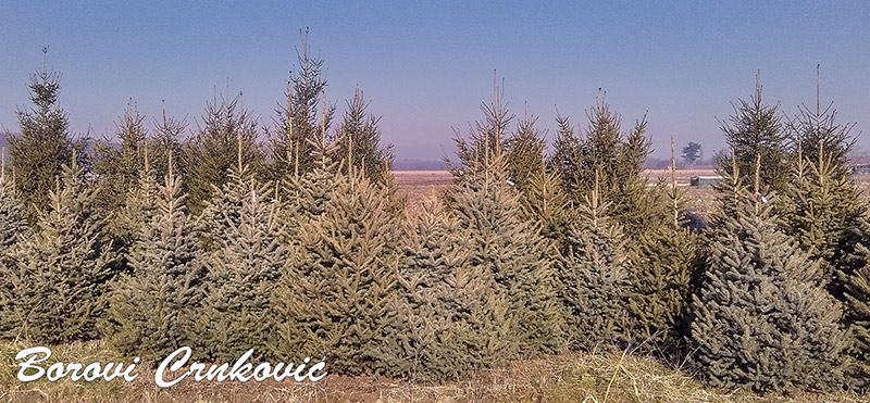 bozicno-drvce